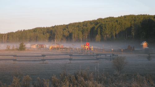misty morning(1)